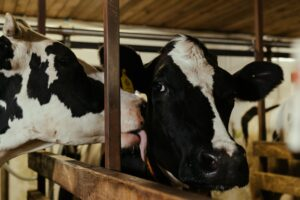 Cover photo for Celebrate Dairy Month in June by Toasting With a Glass of Milk!
